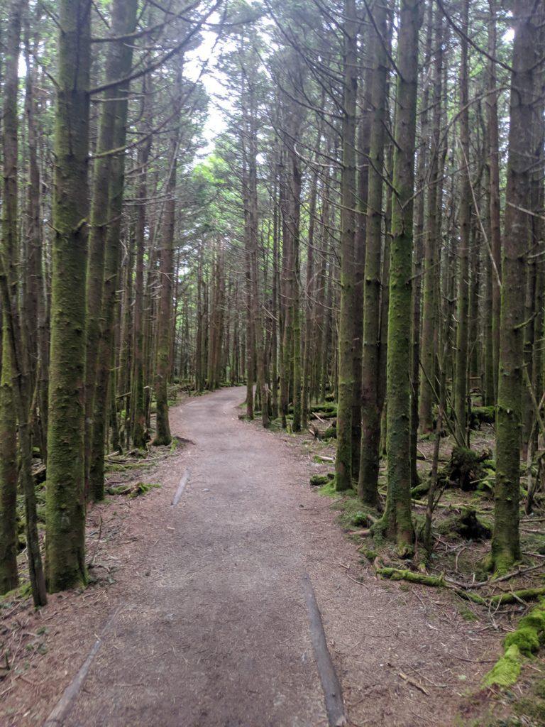 winding trail looking ahead